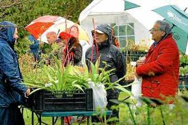 Plant sale in the rain